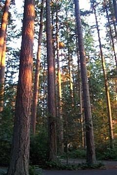 Bow, Washington, forest