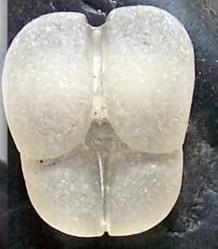 Sea Glass Identification ID question
