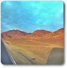 Very Tropical Desert