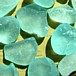 Buy Sea Glass Turquoise