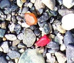 Red_and_amber_sea_glass.jpg
