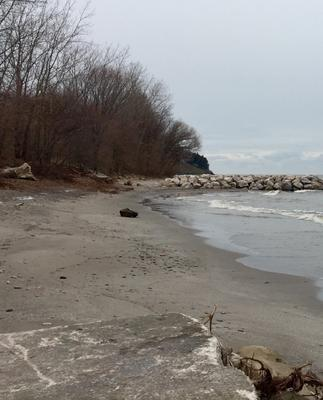 The shoreline bear Edgewater Oark, Cleveland, Ohio