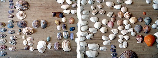 Collection of seashells in Los Organos