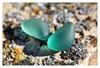 Sea glass gems.
