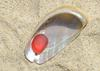 Red Sea Glass in a Seashell