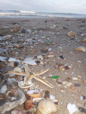 Bounty on the Beach - August 2012 Sea Glass Photo Contest