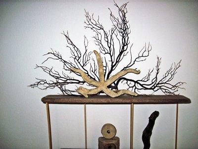 Top shelf Coral and Starfish