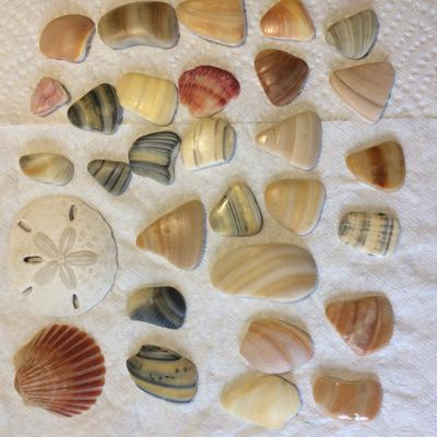 There are also lovely shell pieces