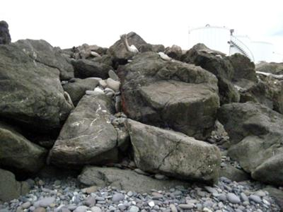 Rocks brought in on ocean side - Nisson Paper Mill is located at the foot of the spit.Several