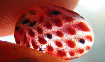 Strawberry Art Glass  - August 2013 Sea Glass Photo Contest
