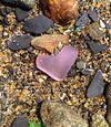 Purple Heart - July 2013 Sea Glass Photo Contest