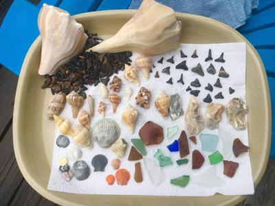 Photo of some treasures found while on vacation on Floridas Gulf coast.